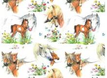 Baumwolle - Pferdewiese